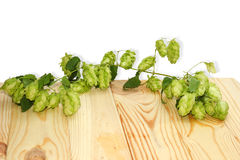Branch of hops on a wooden table Stock Photography