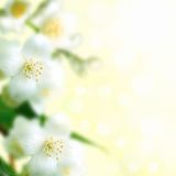 A branch of jasmine. Beautiful border: a branch of jasmine Stock Images