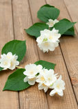 Branch of jasmine. On a wooden table, vertical Stock Photography