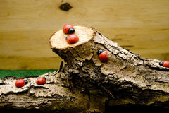 Branch with ladybug Royalty Free Stock Image