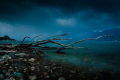 The branch. Lake Lago Maggiore in a storm with a pile of wood in the water stock photography