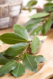 Branch of laurel bay leaves on a wooden board Royalty Free Stock Photography