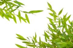 Branch leaf Stock Images