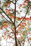 Branch, Leaf and Flower Royalty Free Stock Photography