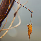 Branch and leaf. Nature in winter. Royalty Free Stock Photography