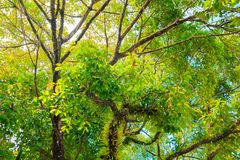 Branch and leaf of tree beautiful in the forest background bottom view Stock Images