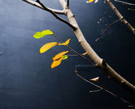 Branch and leaves Royalty Free Stock Photo