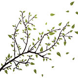 Branch with leaves Royalty Free Stock Photo