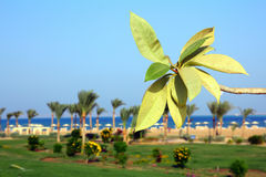 Branch with leaves on beach Royalty Free Stock Photo
