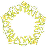 Branch with leaves buds and flowers bindweed floral pentagonal frame, border wreath for your text yellow light green Leaves contou Royalty Free Stock Image