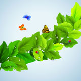 Branch with leaves and butterflies. On blue Stock Photo