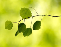 Branch with leaves in the forest Stock Image