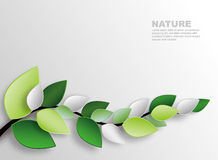 Branch and leaves. Nature wall decoration Royalty Free Stock Images