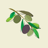 Branch with leaves and olives Stock Photo