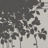 Branch with leaves Royalty Free Stock Photos