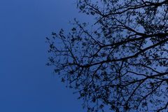 Branch leaves Silhouette tree Stock Image