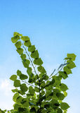 Branch with leaves. On a sunny summer day branch with leaves Royalty Free Stock Image