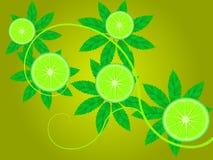 Branch of a lemon Stock Photography