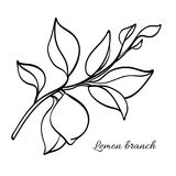 Branch of lemon tree with leaves and natural fruit. Vector illustration Royalty Free Stock Photo