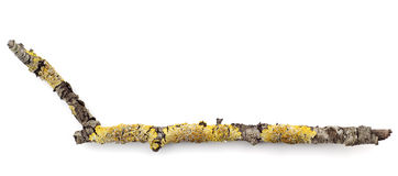 Branch with lichen footnote. Footnote done with branch and lichens Royalty Free Stock Images