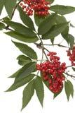 Branch lilac Stock Photos