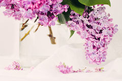 Branch of lilac Royalty Free Stock Photo