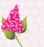 Branch of lilac on the decorative background Stock Photography