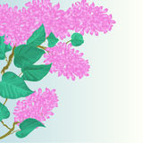 Branch of lilac flowers vector illustration Royalty Free Stock Image