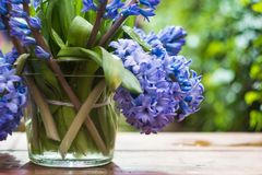 Branch of lilac in a glass stock image