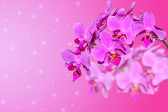 Branch of lilac orchid flowers on gradient blurred Stock Image