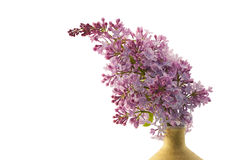 Branch of lilac. Stock Images