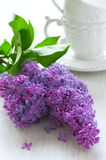 Branch of lilacs Royalty Free Stock Photo