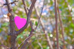 Branch love. Heart sitting between branches against a bokeh background for your copy - as a concept for love or environmentalism Stock Photos