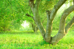 Branch lush green tree with sunlight, low angle shot Royalty Free Stock Photos