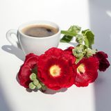 Branch of mallow red flowers and white cup of hot black coffee with foam in the morning sunlight on table on white background royalty free stock photography