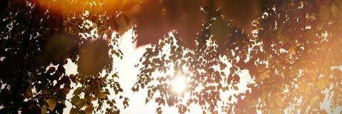 Branch of maple leaves in autumn. On a sunny day Royalty Free Stock Images