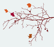 Branch of a maple Stock Photography