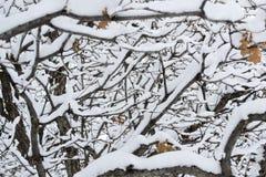 Branch Maze Stock Photos