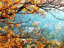 Branch med gula leaves Fotografering för Bildbyråer