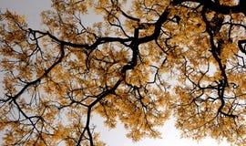 Branch med leaves och härliga fjäderblommor Fotografering för Bildbyråer