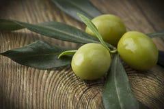 Branch med olivgrön Arkivbilder