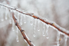 branch with melting sleet. And ice Royalty Free Stock Photos
