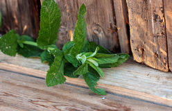 Branch mint. Green leaves of mint on a wooden table Stock Images
