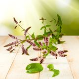 Branch of mint on a table Stock Photography