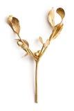 Branch mistletoe Royalty Free Stock Photo