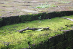 Branch and moss Stock Photography