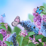 Branch of a multi-colored syringa Royalty Free Stock Photos