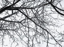 Branch of naked tree. unusual angle view Royalty Free Stock Image