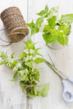 Branch of nettle Stock Image
