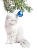 A branch with New Year's ball and white cat on a white background Royalty Free Stock Image